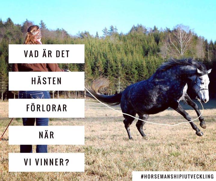 Lucka 13 – Låt aldrig hästen vinna