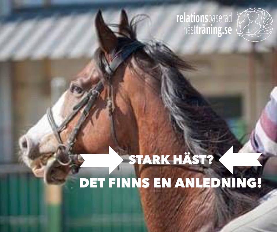 Stark häst? Det finns en anledning!