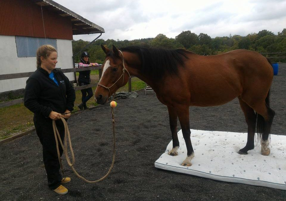Lucka 18 – Finns det plats för din häst att visa vem den är, egentligen?