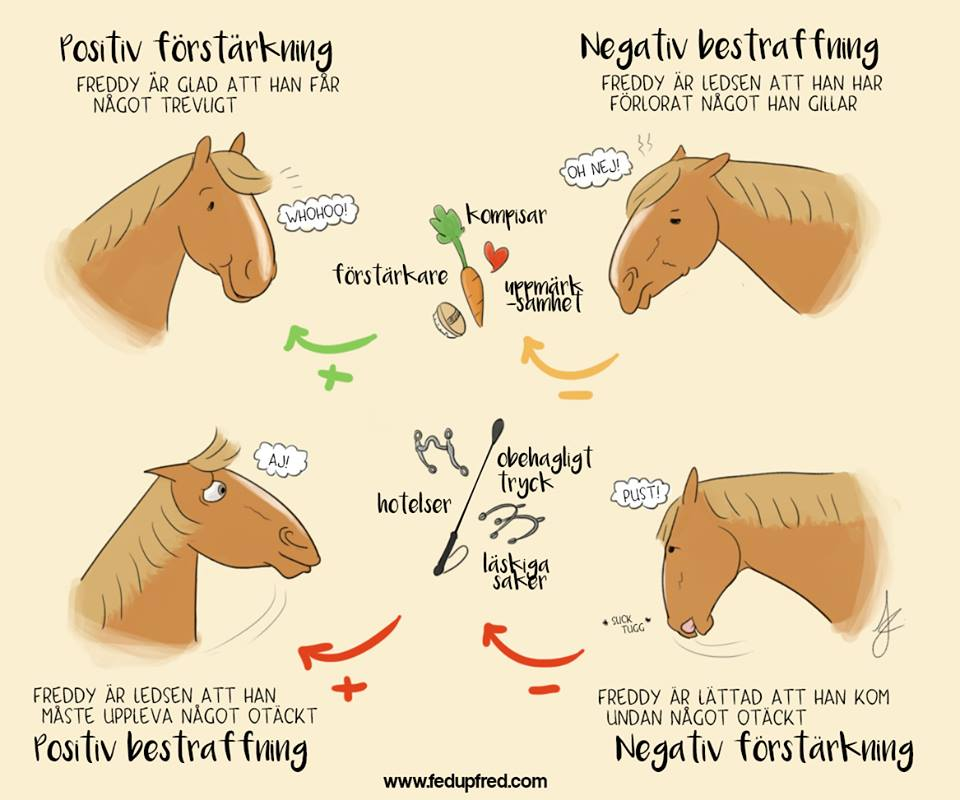 häst, förstärkning, bestraffning,
