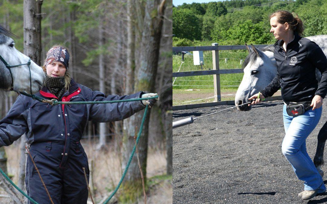 4.7 Känsla: Har din häst förgiftade signaler eller känslor i konflikt?