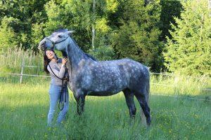 kli, häst, förstärkning, motivation, belöning