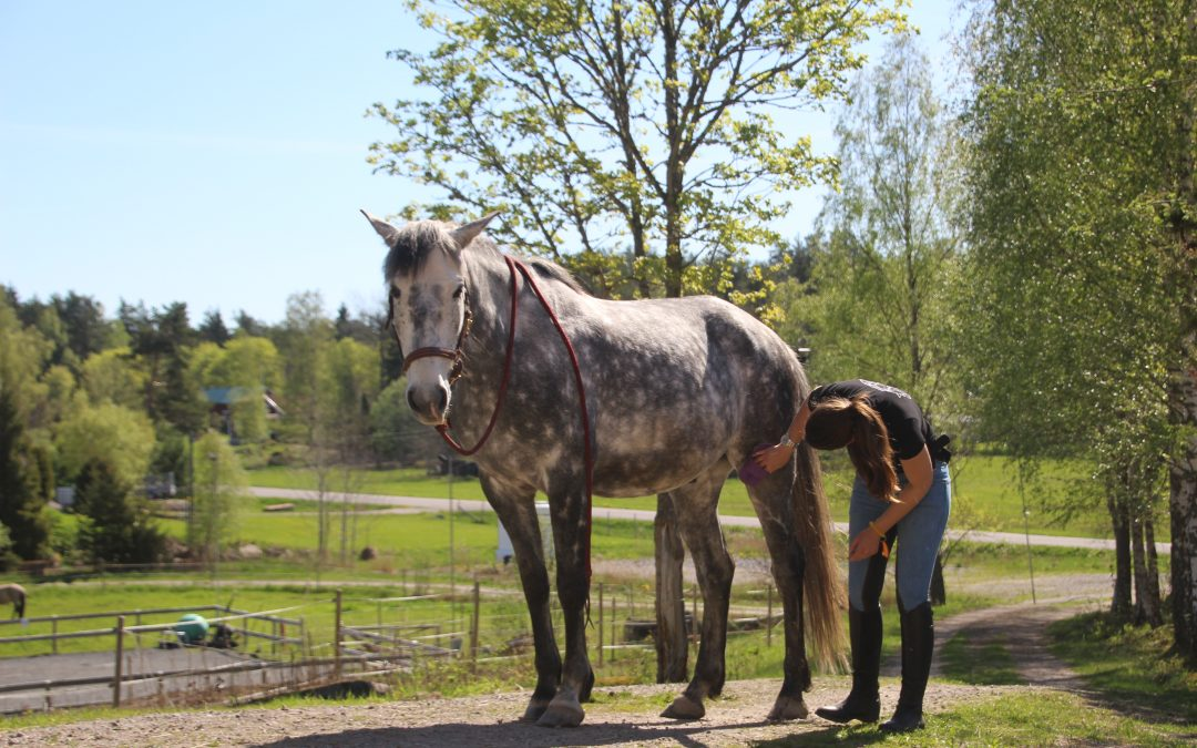 Utforska: Hur din häst känner
