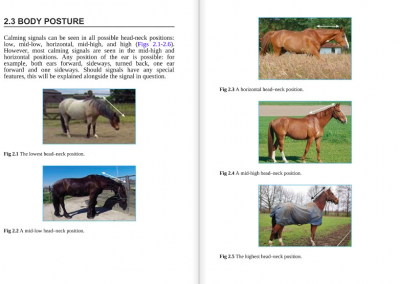 lugnande signaler kroppsspråk häst urdrag
