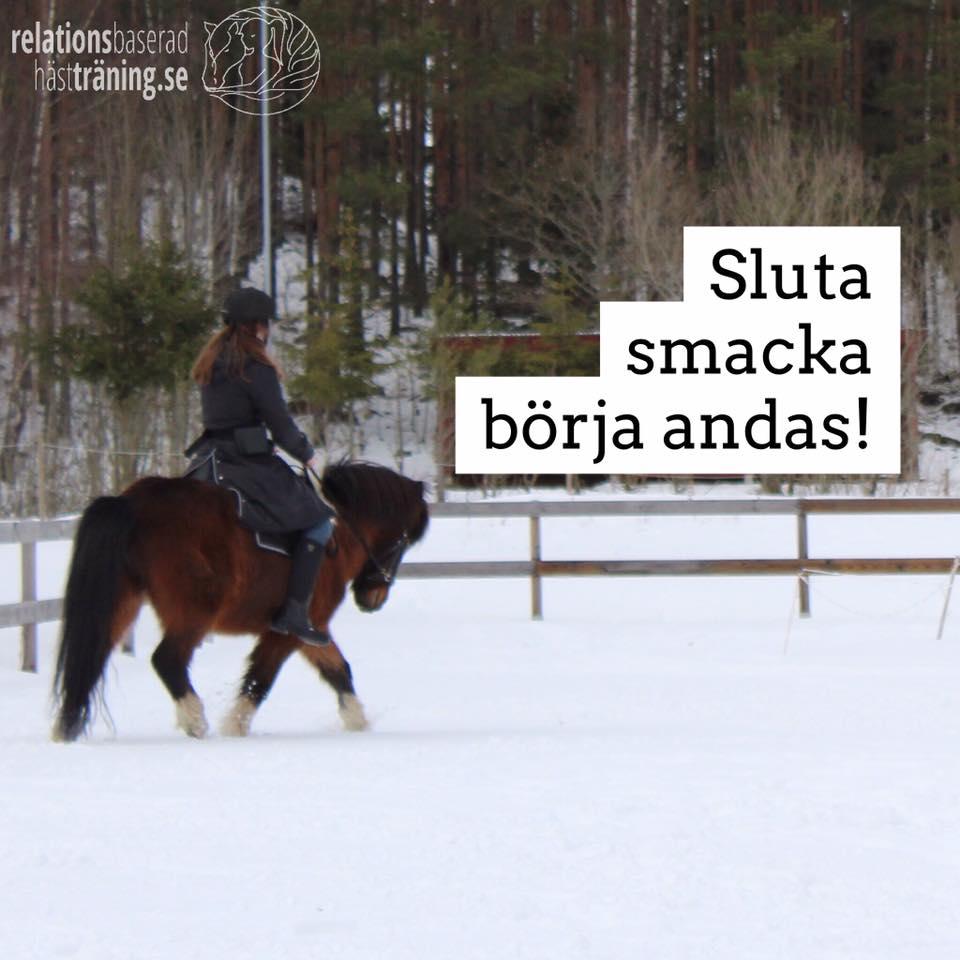 avslappning i ridningen och en häst som deltar i träningen