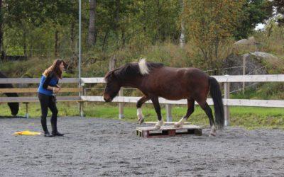 2 övningar för bakbenen (och hela nervsystemet)