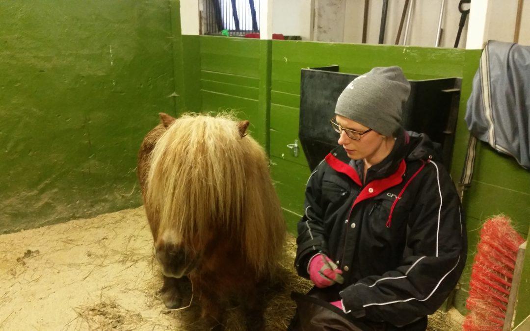 Avslappning i boxen medans en annan häst tränas
