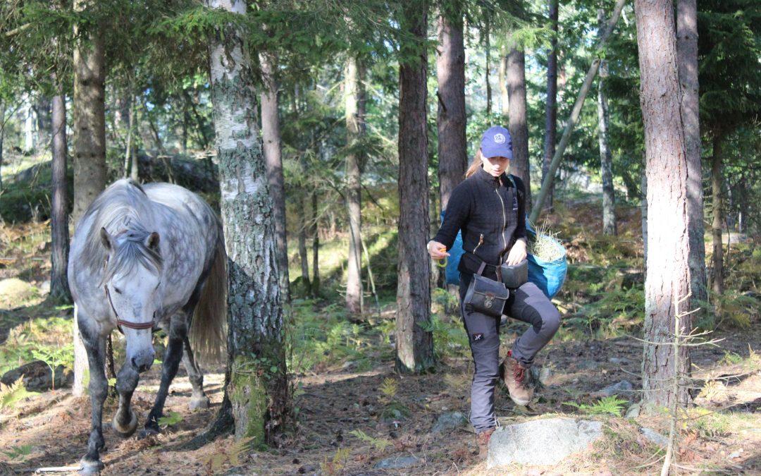 Övning: Lek & träning i hagen