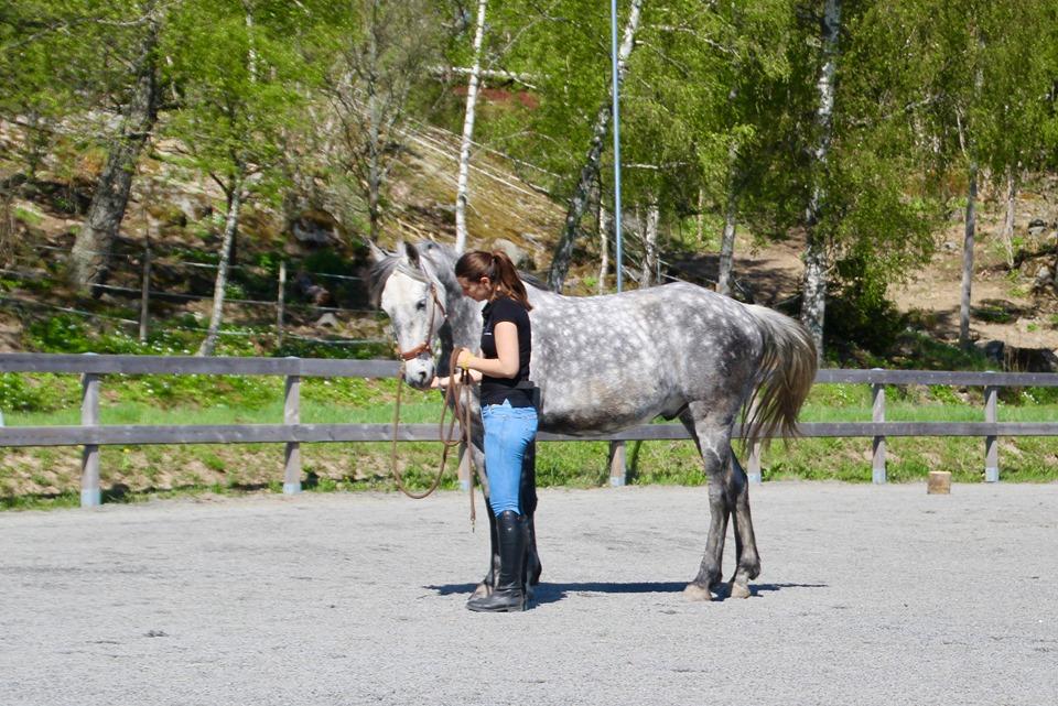 5minutare: Hur stannar din häst?