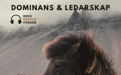 Dominans och ledarskap i hästträning
