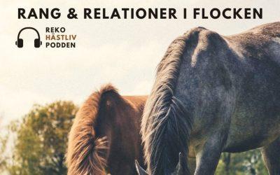 Rang & relationer i hästflocken