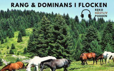 Rang & dominans i hästflocken