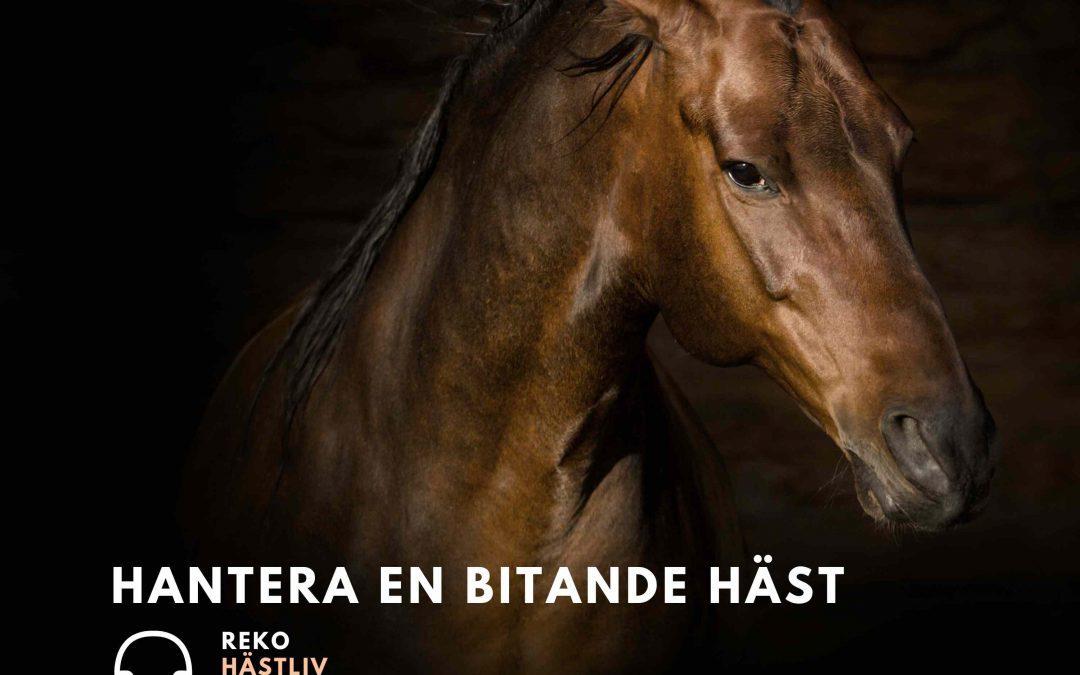 Hantera hästar som bits