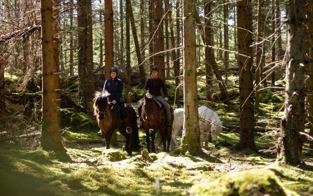 Podd: Hästflytt & långritt